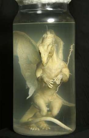 dragon_baby